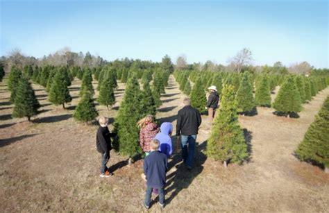 ideas about east texas christmas tree farms easy diy