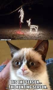 Go back gt gallery for gt grumpy cat funny pictures