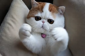 adalah beberapa foto Snoopy yang beredar di internet. Foto-Foto kucing ...