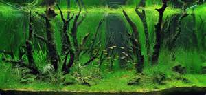 Underwater Gardening The World?s Best Aquariums   athenna design