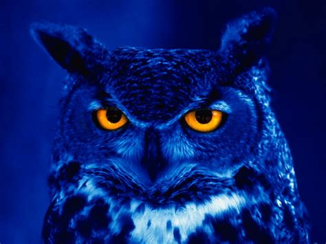 night owls night owl open forum technical analysis with chessnwine
