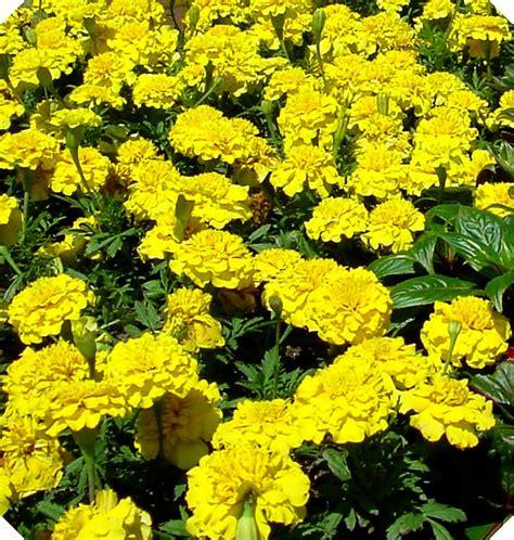 tipi di fiori bianchi tipi di fiori gialli stratfordseattle