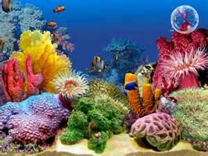 aquarium fish How to Introduce Fish to Your Aquarium