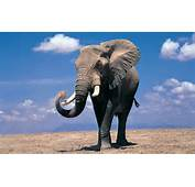 Cute Elephant Wallpapers HD 10947 Wallpaper  WallDiskPaper
