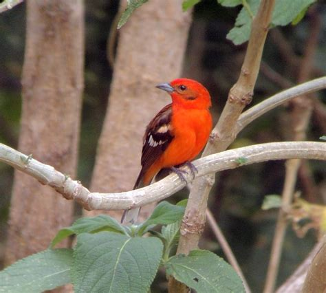 where to see beautiful birds in costa rica