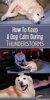 lovable dogs how to keep a calm during thunderstorms