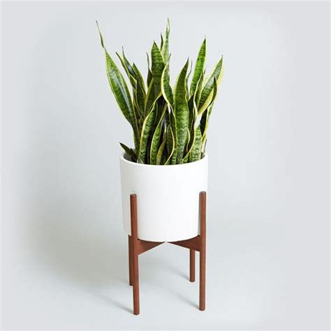 indoor plants  work  natural air purifiers