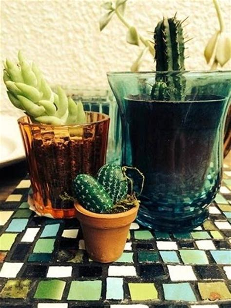 cactus home decor home decorating with cacti and handmade cactus home