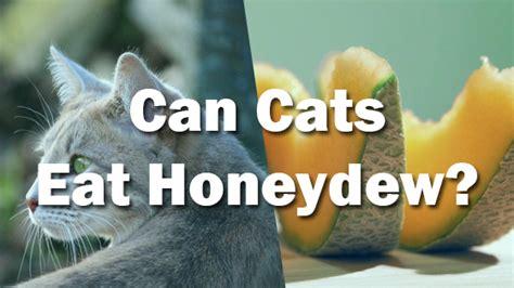 can dogs eat honeydew can cats eat honeydew pet consider
