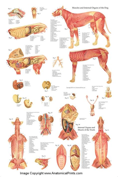 dogs anatomy 1000 ideas about poster on dogs signs and quotes