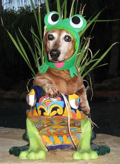 infrognito frog costume  dogs  cats frog costume