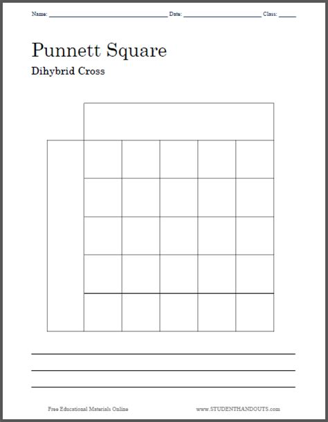 Dihybrid Cross Worksheet by Worksheets Dihybrid Punnett Square Worksheet Opossumsoft