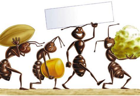 formiche in casa come eliminarle formiche in casa come eliminarle con le esche alimentari
