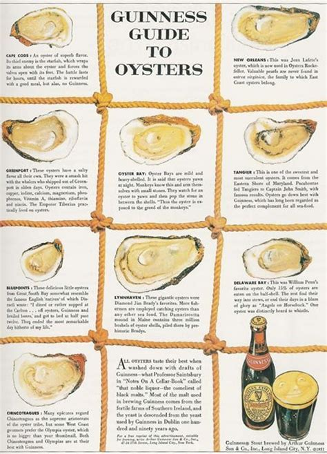 guide to different types of oysters work it pinterest
