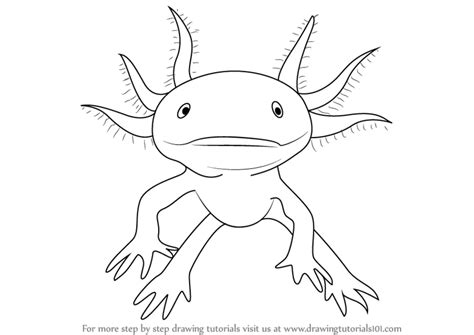 Axolotl Coloring Page by Step By Step How To Draw A Walking Fish