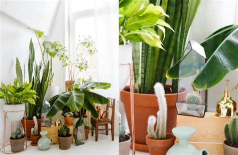 Plante Design D Interieur by Bien Choisir Sa Plante D Int 233 Rieur Clem Around The Corner