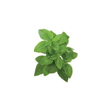 click and grow refills click and grow refills 100 using plants in home decor