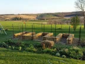 Aqha Straw Bale Gardening Tips Straw Bale Garden Layout