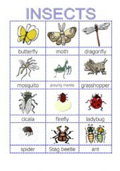 printable insect flash cards english worksheets insect pictionary
