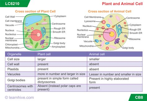 learnhive icse grade  biology  cell lessons