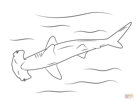 coloring page of a hammerhead shark hammerhead shark outline www imgkid com the image kid