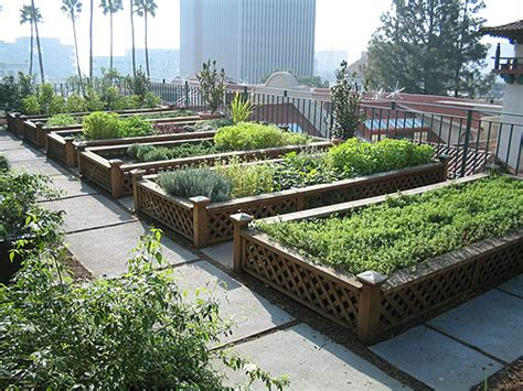 roof garden plants rooftop gardens in australia are on the rise exles