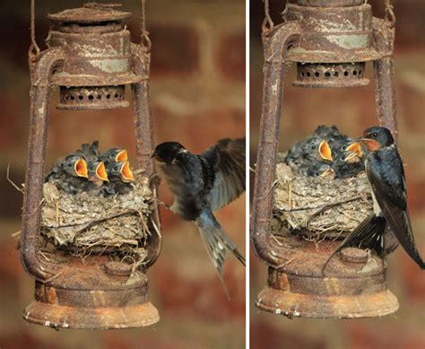 22 unusual bird nests that prove nature is amazing
