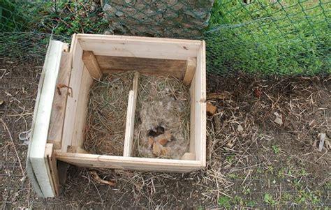 come allevare conigli in gabbia l allevamento