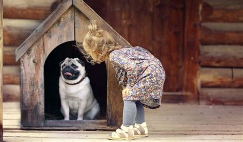 how to stop a dog pooping in the house how to stop dog from pooping in house or dog crates explained