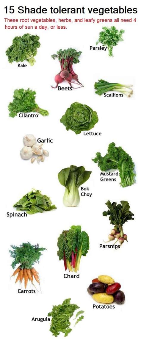 Gardeners Should Be Familiar With The Different Types Of How Much Sun Does A Vegetable Garden Need