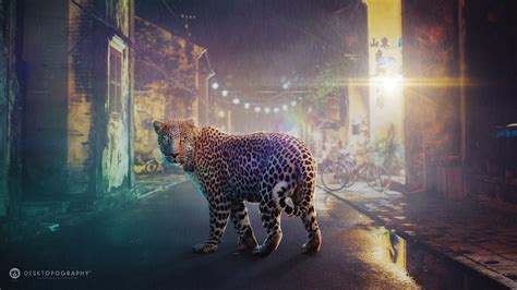 night leopard wallpapers hd wallpapers id