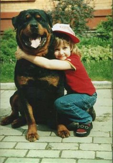 rottweilers and children 1000 images about rottweilers on rottweiler