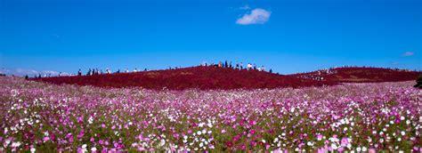 alfombra japonesa jap 243 n alfombra de flores discover the new world