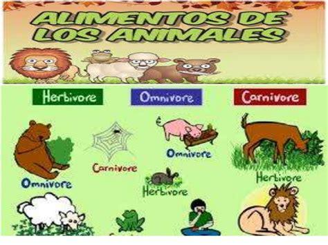 imagenes de animales por su alimentacion clasificaci 243 n de los animales seg 250 n su alimentaci 243 n power