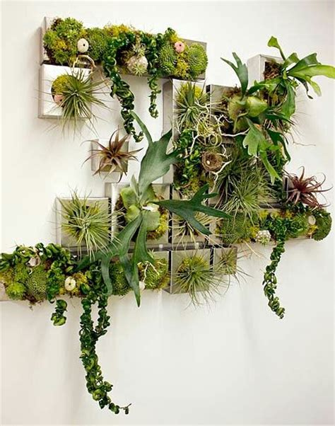home decorative plants 25 best ideas about wall planters on pinterest diy