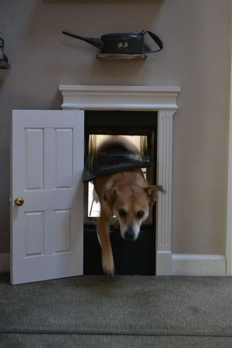 Doggie Door Treat Your Dog To A High Class Doggy Door Welcome To