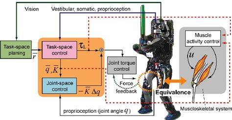 central pattern generator en español full body motion control and learning for biped humanoids