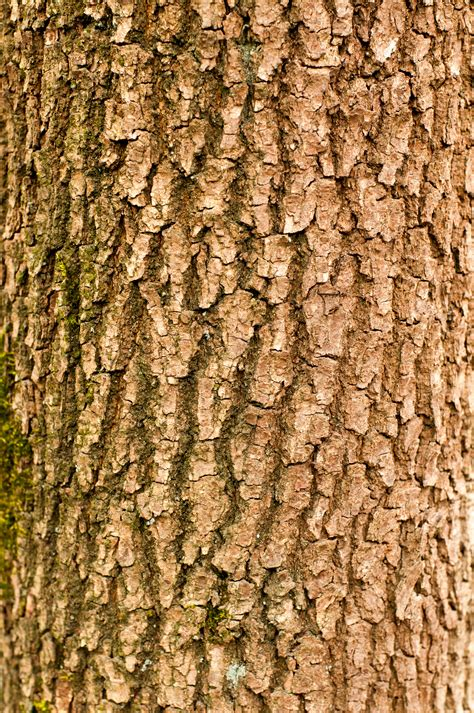 wood texture free high resolution tree branch photo