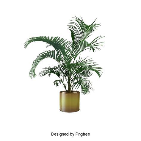 plantas para jardin mediterraneo plantas para jard 237 n mediterraneo