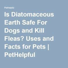 is diatomaceous earth safe for puppies 105 best images about diatomaceous earh on