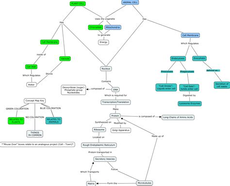 concept map cell nucleus ls1a