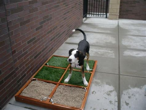 balcony dog bathroom balcony ideas for pets pet patio potty not just for