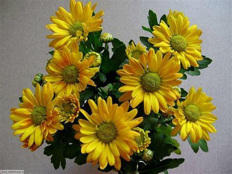 fiori recisi foto fiori recisi 1 per sfondi settemuse it