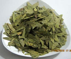 Jati Cina Cassia Angustifolia 25kapsul Teh Jati Cina 25kpsl ratu agung herbal temukan rahasia herbal manfaatnya