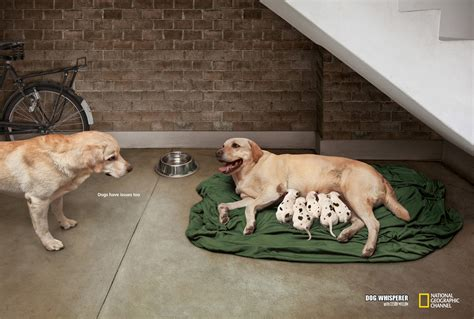 puppy ads 20 best print ads of 2012