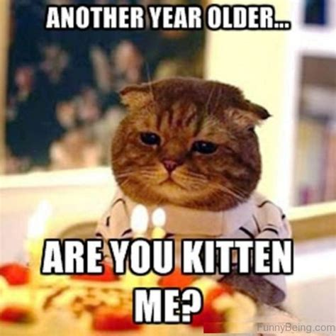 Meme Generator Kitten - 48 amazing birthday memes