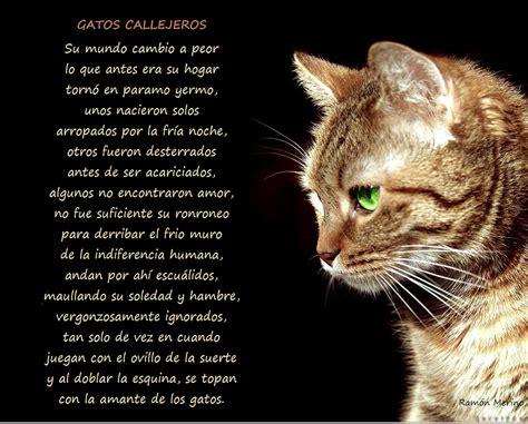 una noche un gato poemas de gatos im 225 genes de 10