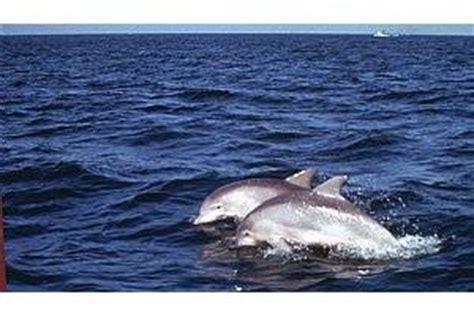 virginia aquarium dolphin watching boat trips 1000 images about loving virginia beach n norfolk