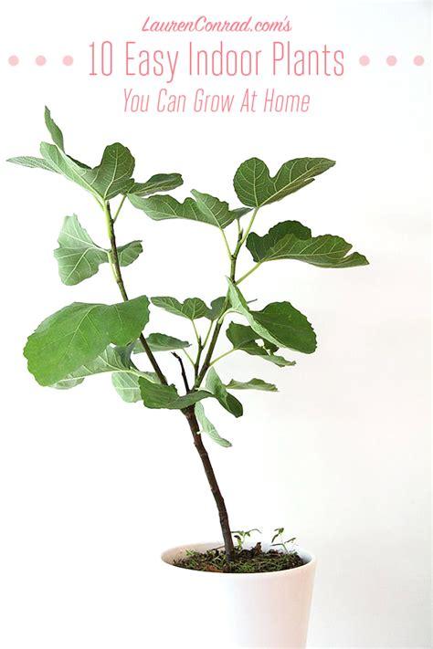 easiest indoor plants green thumb the easiest indoor plants to grow in your