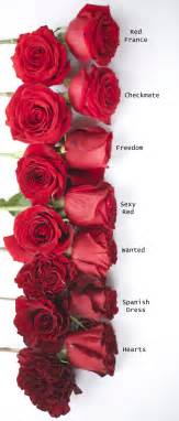 Other Names For Patio Red Rose Study Flirty Fleurs The Florist Blog